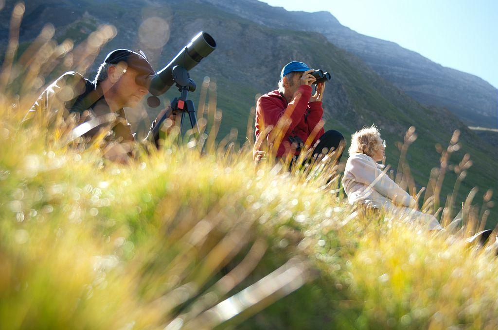 Observation faune, photo Pierre Masclaux, Parc national des Ecrins.