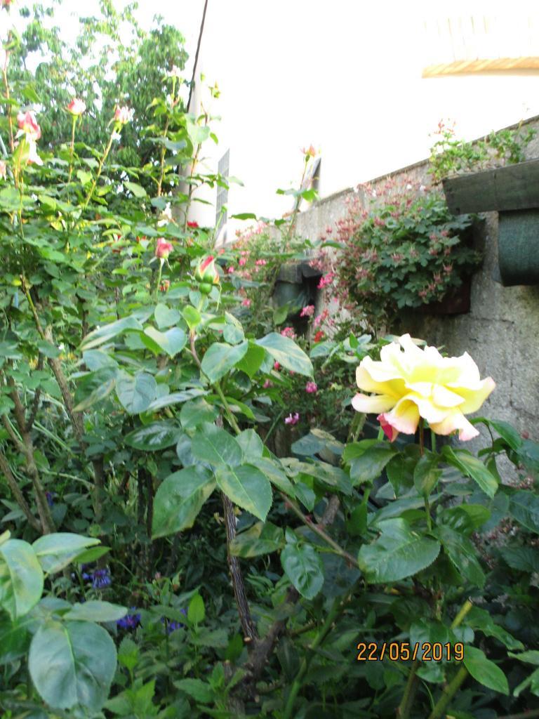Roses et senteurs
