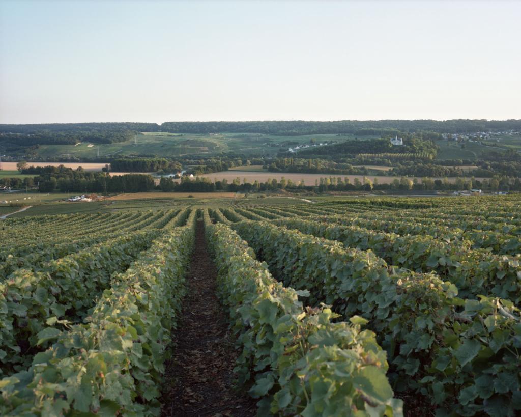 Panorama sur la vallée de la Marne à partir de Venteuil