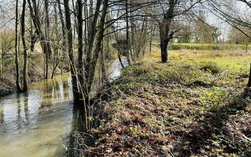 Milieux humides: l'Ardoux