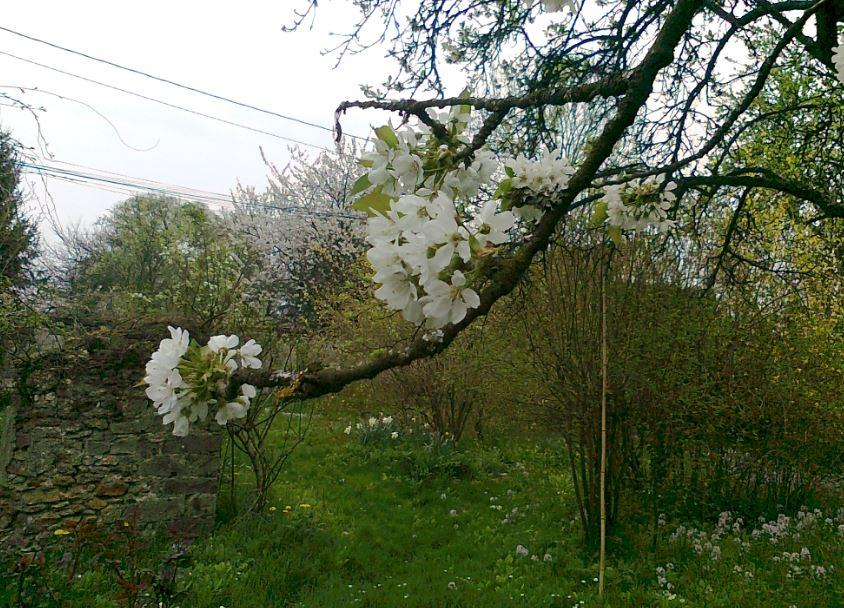 Vue à partir du cerisier