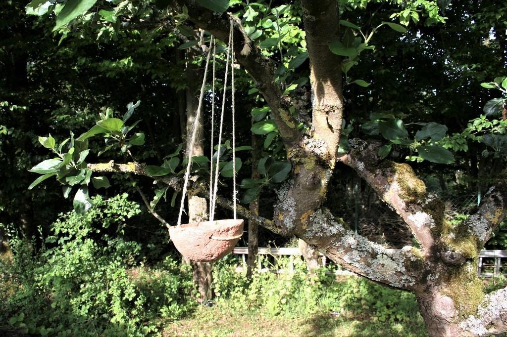 Coupelle à la branche de l'arbre fruitier