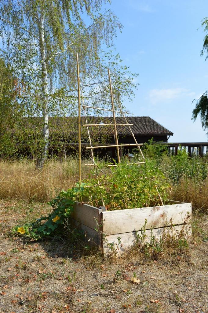 Carré de permaculture