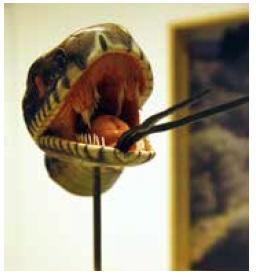 Reptiles et Amphibiens-manipulations