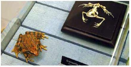 Reptiles et Amphibiens-vitrine