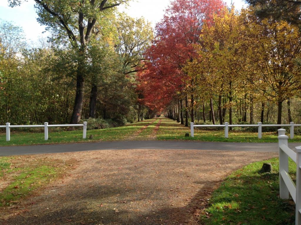 Parc du château du Martreil