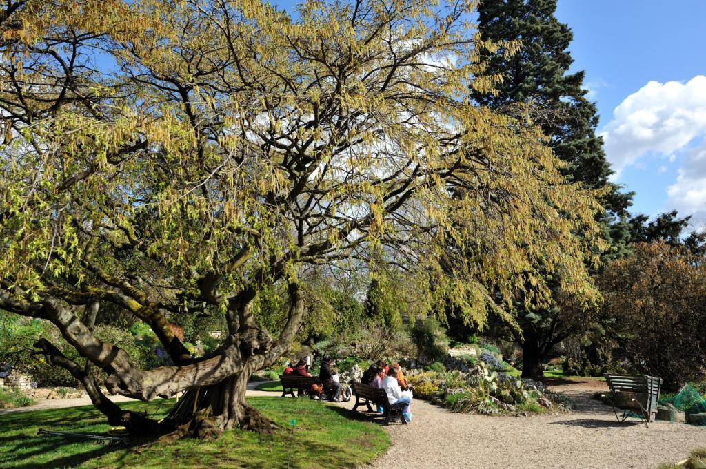 Le jardin alpin du Muséum © F-G Grandin
