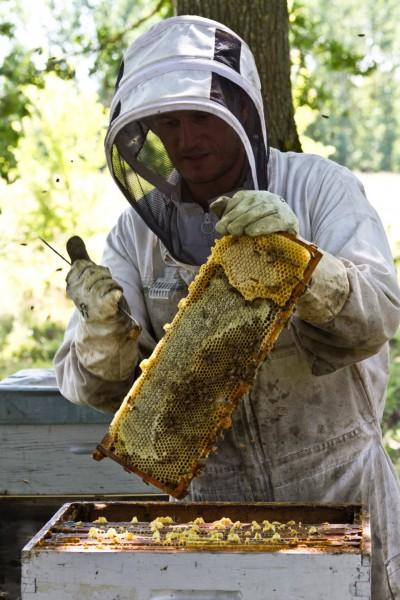 apiculteur-Constanzo