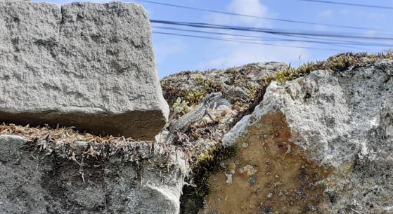 Un lézard sur un mur de pierre