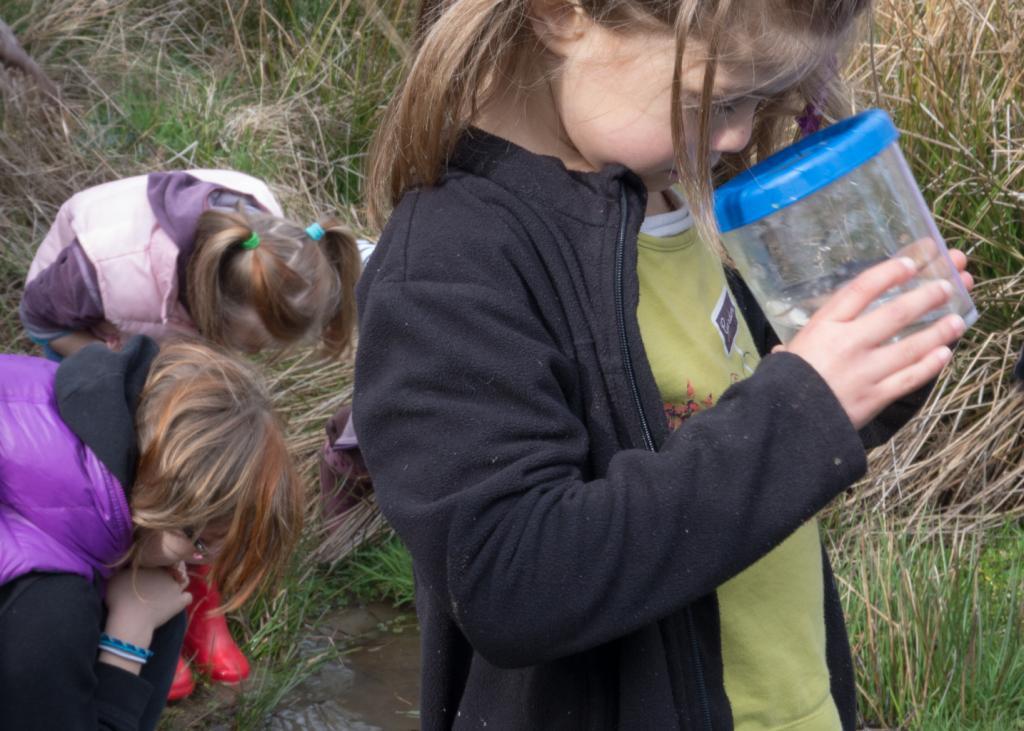 A la recherches des petites bêtes de la mare