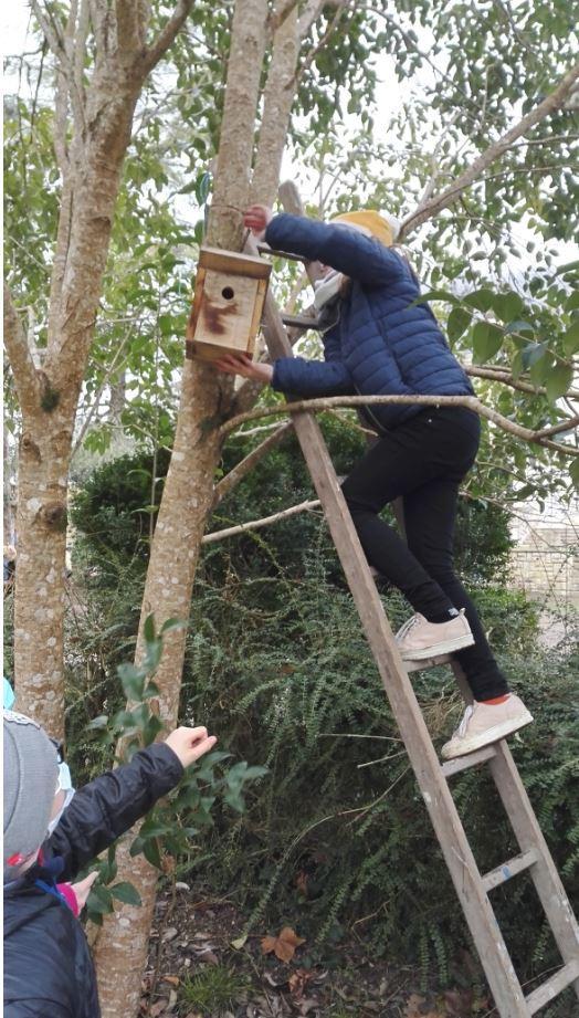 nettoyage des nids en hiver