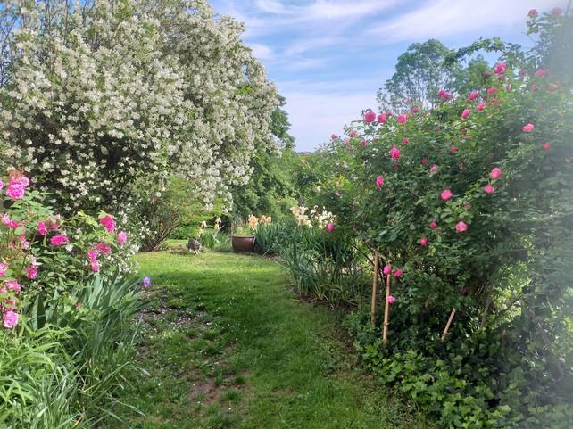 jardin seringat roses