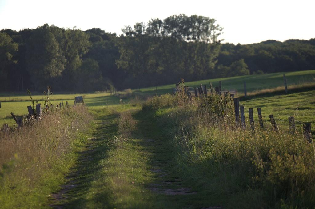 La prairie de pature, la forêt au loin