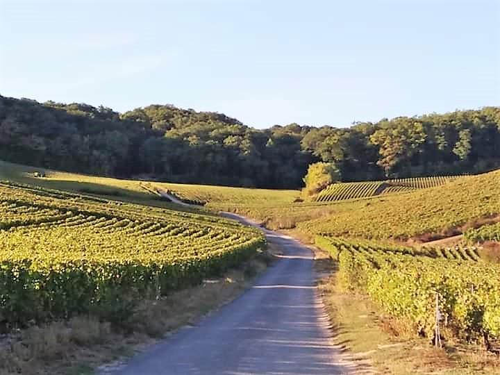 Vignes de Champagne en Automne à Cumières
