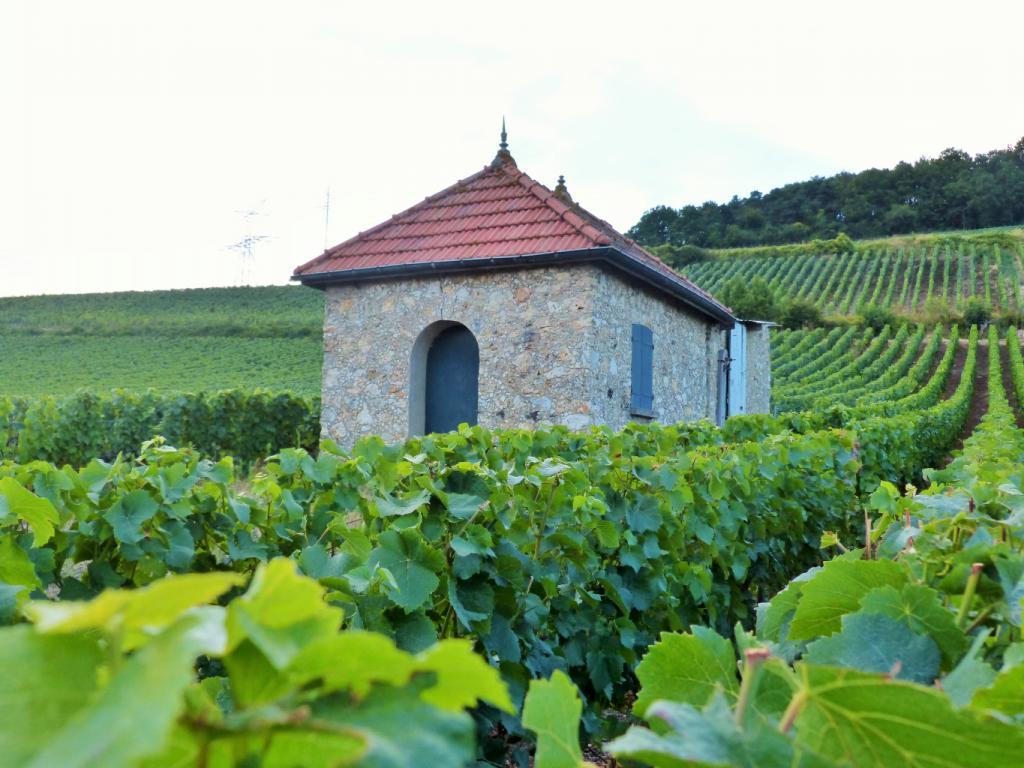 Une loge de vigne, témoin de l'activité viticole