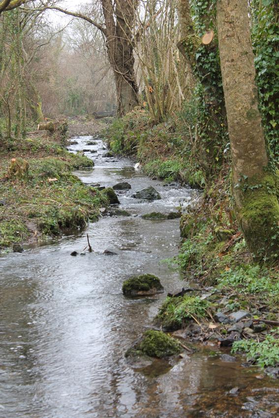 Ruisseau se jetant dans l'étang du Caro