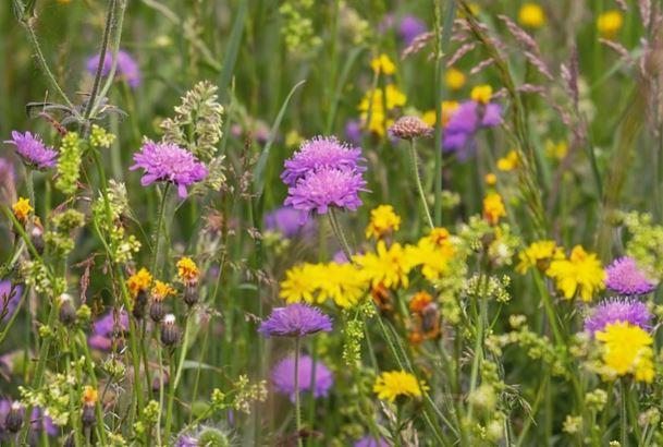 observation de la flore locale