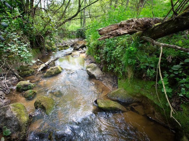 Ancien étang de la Frensaye-au-Sauvage