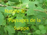 Nature et Paysages de la Suippe