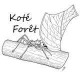 Koté Forêt