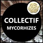 Collectif Mycorhizes