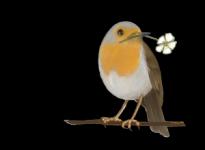 Club Bio Top faune et Flore