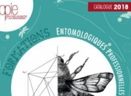 Devenir incollable sur les insectes