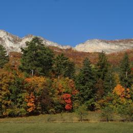 Milieux, plantes et paysages de la montagne de Charance