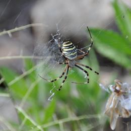 A la découverte du monde soyeux des araignées