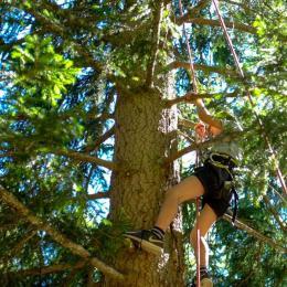 A la découverte du sol et voyage dans les arbres