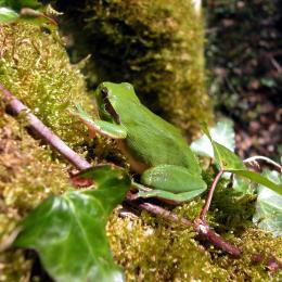 A la découverte des amphibiens des landes girondines