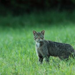 La faune sauvage au lever du jour