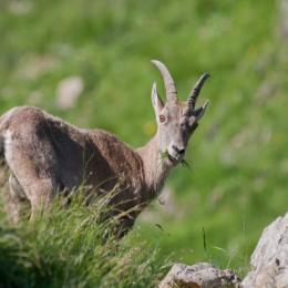 Fête de la Nature Du Haut Verdon Val d'Allos