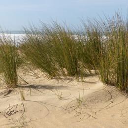 Objectif dunes