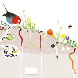 La vie du sol et du compost au potager